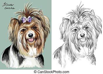 Colorido y mano monocromo dibujando retrato vectorial de Biewer terrier
