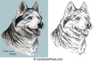 Colorido y mano monocromo dibujando retrato vectorial de Siberia Husky