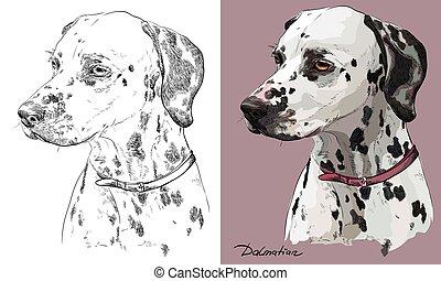 Colorido y monocromo dibujando retrato vectorial de dálmata