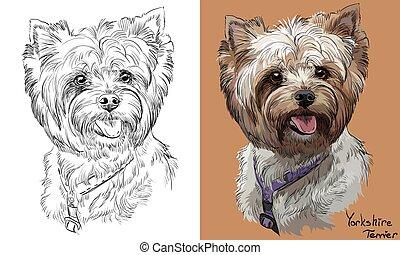 Colorido y monocromo dibujando retrato vectorial de Yorkshire Terrier