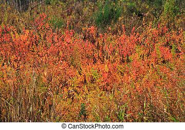 Coloridos arbustos de otoño