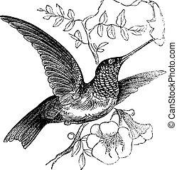Colubris cosechado con colibrí