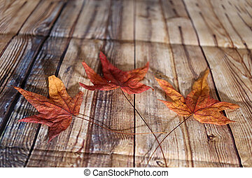 Composición de tres hojas de otoño