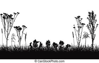 composición, salvaje, vector, pasto o césped, illustration., plantas, silhouette., malas hierbas, pradera