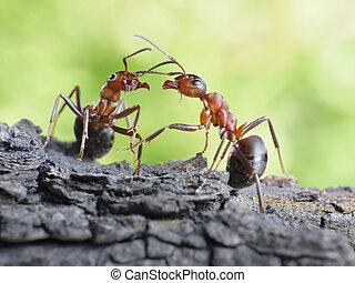 comunicación, enlaces, hormigas, diálogo