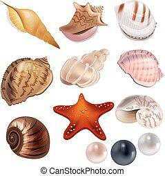 Con cáscaras realistas y perlas