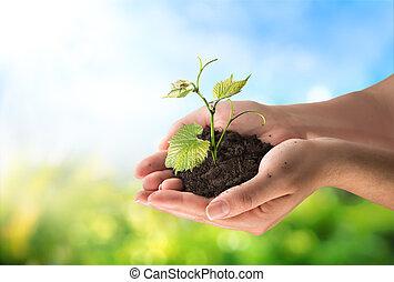 Concepto de agricultura, pequeña planta