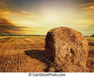 Concepto de cosecha
