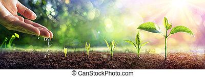 concepto, plantas, llamarada, mano, crecer, -, regar, joven, efecto