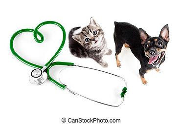 concepto, veterinario, gatos, otro, mascotas, perros