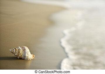Concha de caracol en la arena.