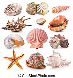concha marina, colección