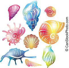 concha marina, coloreado
