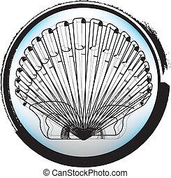 concha marina, ilustración