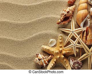 Concha marina sobre arena