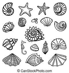 Conchas marinas en fondo blanco