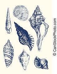 conchas marinas, vario, 7