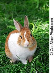 conejo conejito