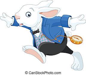 conejo corriente, blanco