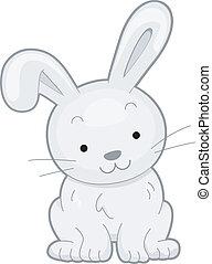 Conejo de frente