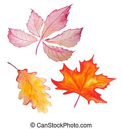conjunto, acuarela, tres hojas, otoño