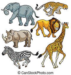 conjunto, animales, africano, sabana