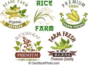 conjunto, emblema, granja, frijol, diseño, vegetal, cereal