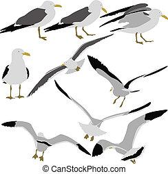 conjunto, gaviotas, fondo., siluetas, vector, negro, il, blanco