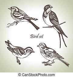 conjunto, hand-drawn, pájaro, ilustración