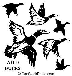 conjunto, illustration., vuelo, vector, ducks., salvaje