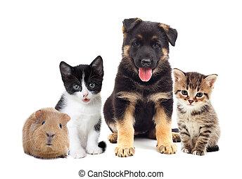 conjunto, mascotas