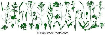 conjunto, silhouettes., plantas, vector, salvaje, illustration., malas hierbas
