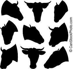 conjunto, vaca, diferente, cabezas