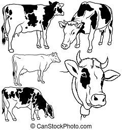 conjunto, vaca