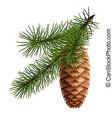Cono de pino con rama