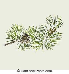 cono, pino, rama, nieve