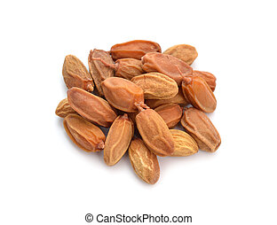 conocido, comúnmente, neem, nimtree, lilac., azadirachta, fruta, indica, indio, leaves., aislado, o