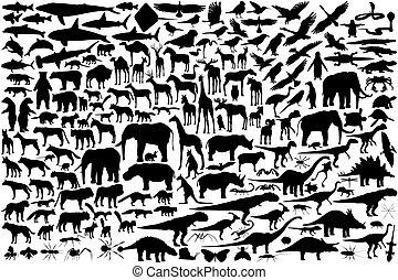 contornos, animal