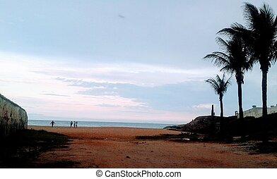 coqueiros, areia, ceu, praia