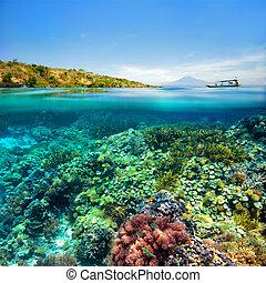 Coral arrecife en el fondo del volcán