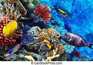 coral, egipto, sea., áfrica., pez, rojo