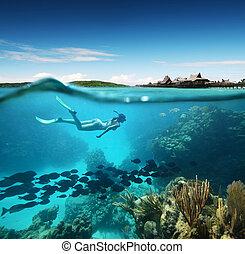 coral, mujer, joven, snorkeling