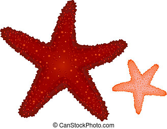 coral, starfishes, rojo