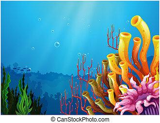 corales, mar, debajo