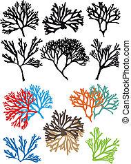 corales, vector, conjunto, escollos