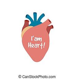 Corazón humano aislado en blanco