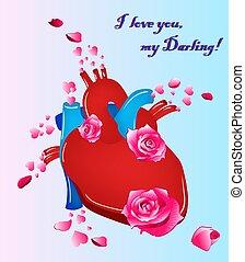 Corazón humano anatómico con flores. Ilustración de vectores.