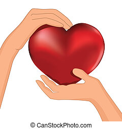 corazón, mano, persona, vector, asimiento, rojo