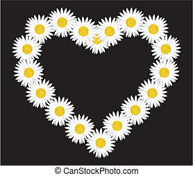 corazón, margarita de flor
