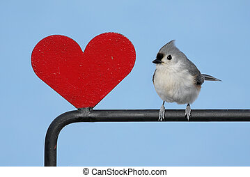 corazón, pájaro